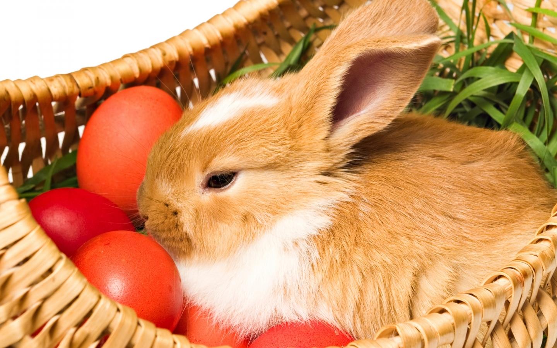 Кормушки сеном для кроликов фото победили
